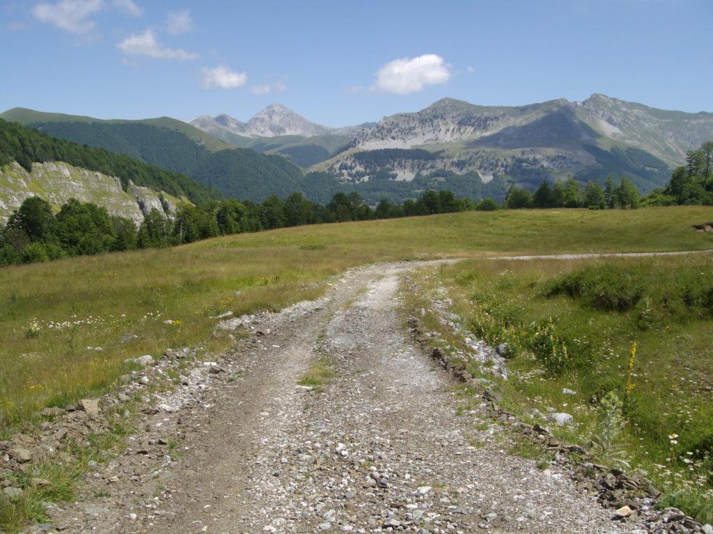 Put prema Vuče potoku, u pozadini Komovi