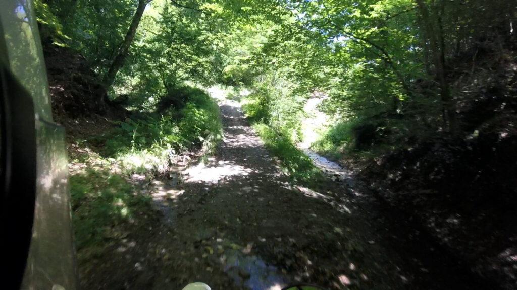 Šumski put ka Drabiću